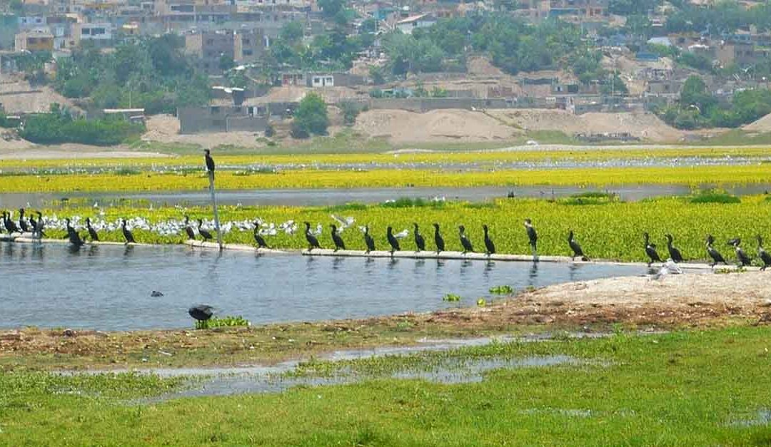 Científico peruano logra descontaminar importante laguna de Huaral