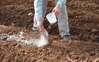 Hidrogeles agrícolas – ¿Cómo se aplican?