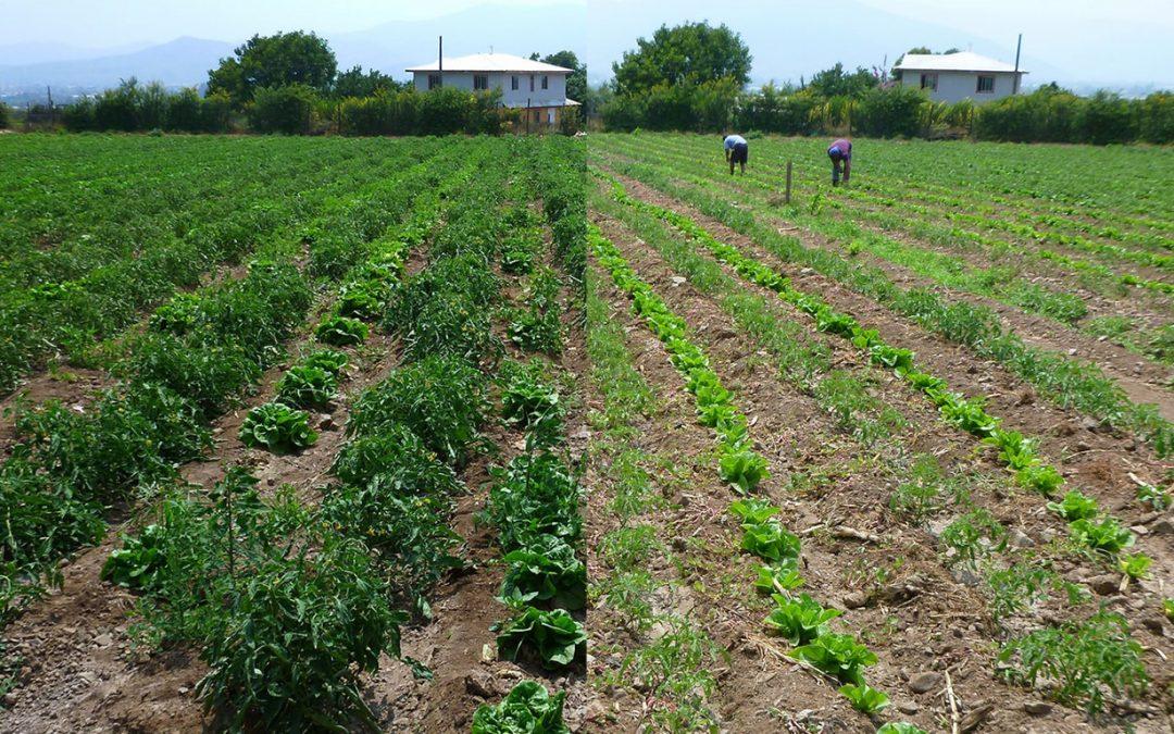 5 tecnologías de bajo costo para enfrentar la sequía en hortalizas