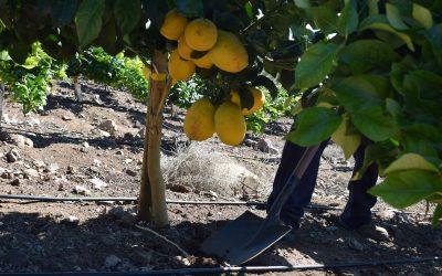 5 Tecnologías de bajo costo para enfrentar la sequía en un huerto frutal