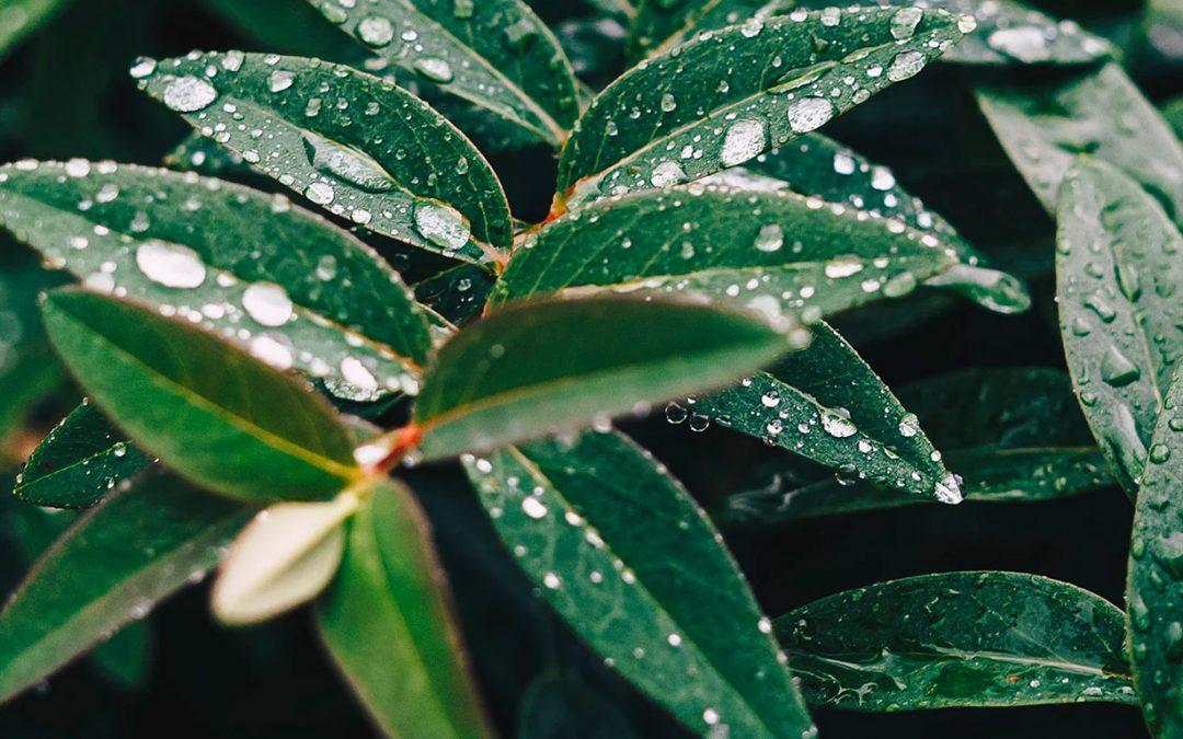 Eficiencia Hídrica Regenerativa – ¿Qué es?